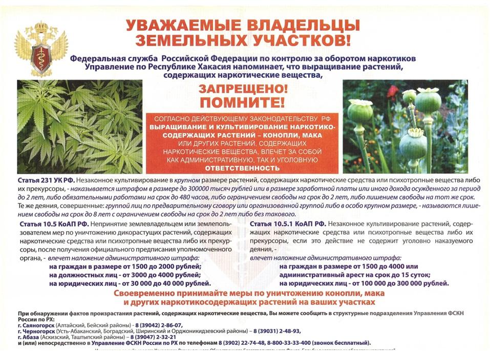 Конопля ответственность в россии аксессуар для марихуаны